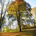 Červený buk v Medláneckém zámeckém parku vyhrál v anketě o nejhezčí strom Brna 2013. V úterý 12. 11. 2013 v 16.00 bude ověnčen za přítomnosti zástupců OPM, ÚMČ Brno – […]