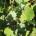 Pravidelné Medlánecké farmářské trhy se konají v sobotu 10. 3.2018. od 9.00 do 12.00 na nádvoří SC Sýpka. V rámci farmářských trhů probíháblešák v Konírně a hovoryse starostou a místostarostkou […]