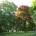 Mohlo by vás zajímat KINEMATOGRAF v Zámeckém parku – PROGRAM Letní kino v Zámeckém parku koncem srpna Letňáky v Brně 2015 Kavárna Místo na Třešňové vás zve v březnu do […]