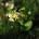 OBČANÉ PRO MEDLÁNKY si vás dovolují pozvat na 1. JARNÍ BRIGÁDU zaměřenou na úklid a výsadbu v Přírodní zahradě u medláneckého rybníka začínáme v sobotu 28. 3. 2015 od 15:00 […]