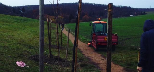 """V sobotu 14. 11. 2015 jsme vysadili tři ořešáky financované z grantu Společně pro Brno nadace Veronica. Místem výsadby je počátek ořešákového stromořadíu """"haldy"""" při ulici V Újezdech v půli […]"""