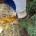 5.11.2016 za krásného počasí se sešli dobrovolníci z řad občanů a neziskových organizací Rezekvítek a Občané pro Medlánky za medláneckým rybníkem, aby rukou společnou vysadili nemálo rostlin z dotace na […]