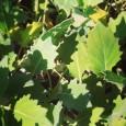 Bioodpad Dejte odpadu ještě šanci J ….. tak zní věta vtelevizní reklamě na tříděný odpad Ze zahrádky (listí, větve, tráva, ovoce, zelenina, aj.), zbalkonů (nepotřebný obsah ztruhlíků, květináčích), zkuchyně (zvadlé […]
