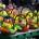 Pravidelné Medlánecké farmářské trhy se konají v sobotu 13. 4. 2019. od 9.00 do 12.00 na nádvoří SC Sýpka. V rámci farmářských trhů probíhají hovoryse starostou před Sýpkou a Fler […]