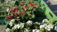 Medlánecké farmářské trhyse konají vkvětnu v sobotu 12. 6. 2021 od 9.00 do 12.00 na nádvoří SC Sýpka. Na trhu je již tradičně možno pohovořit se starostou od 10: do […]